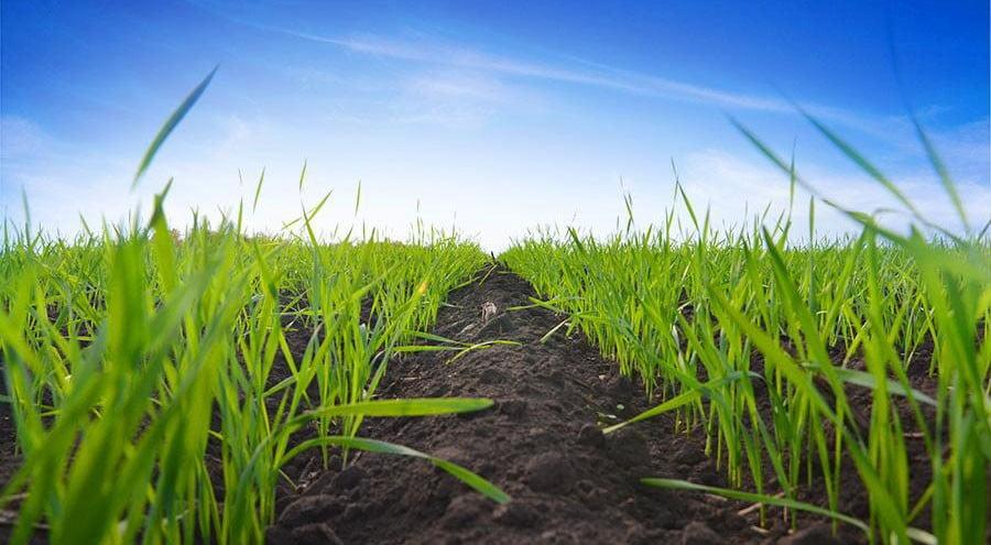 Тривалий захист насіння за будь-яких умов та ситуацій