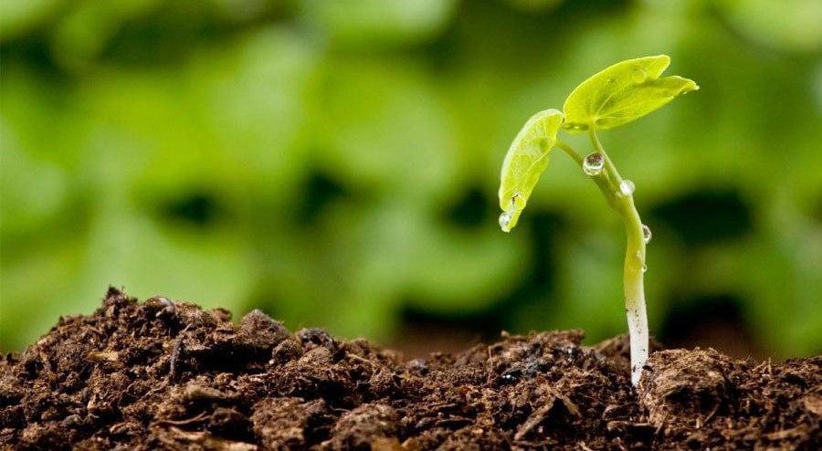 Як нестача живильних елементів у рослин позначається на здоров'ї людини