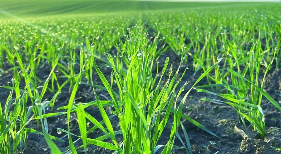 Ефективність застосування гуматів в сучасному землеробстві