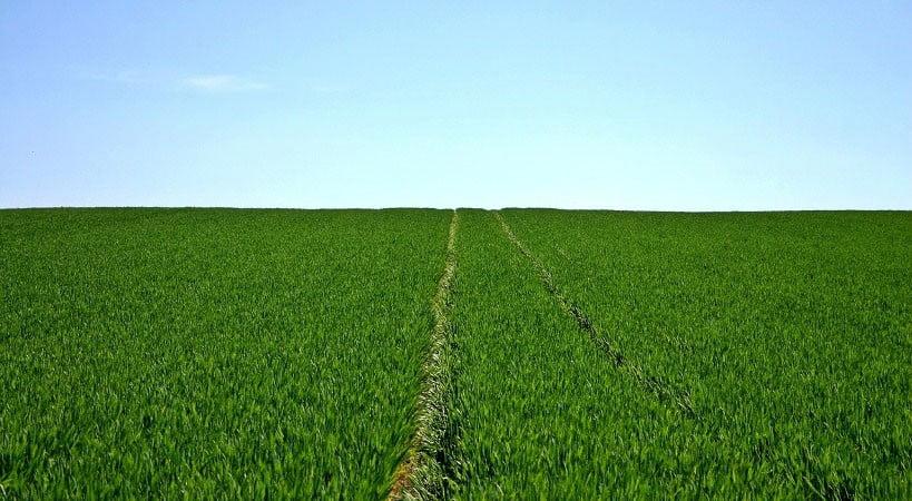 Обробка насіння озимих культур комплексом мікроелементів
