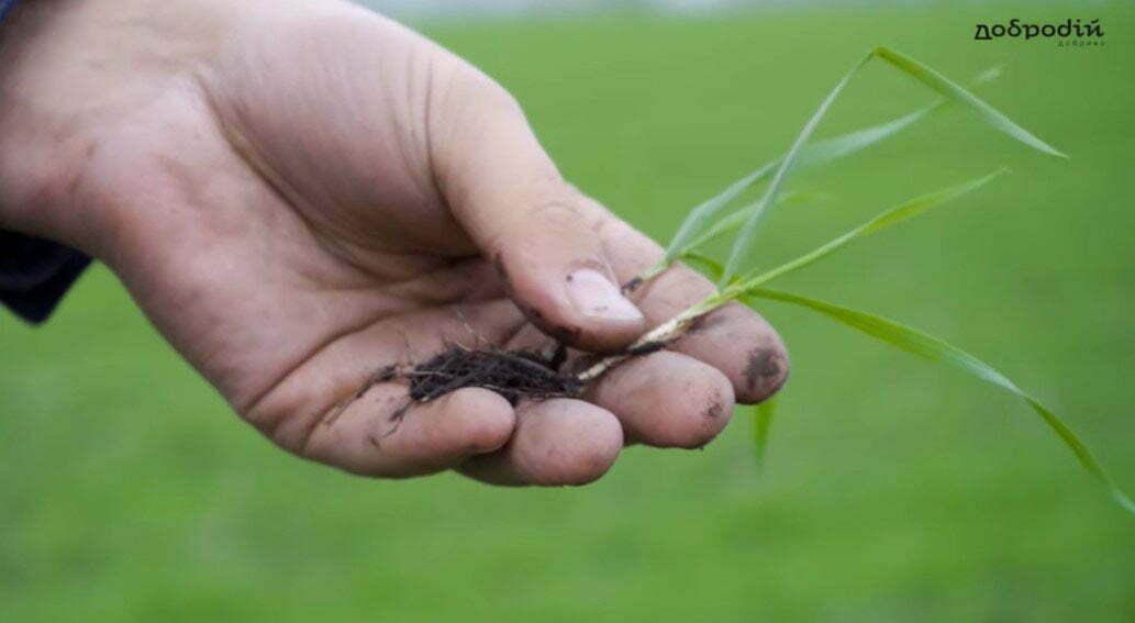 Як в період підняття цін зекономити на обробці зерна?